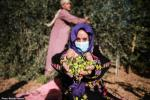Female farmer's hopes hang on olive harvest